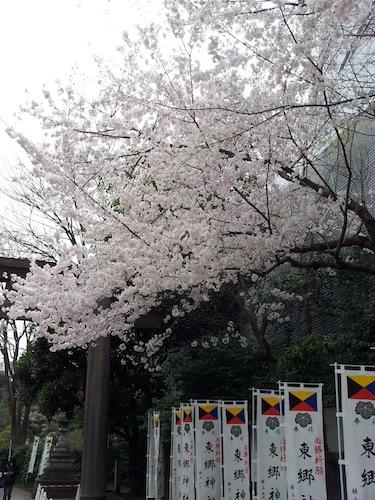 東郷神社の桜 height=